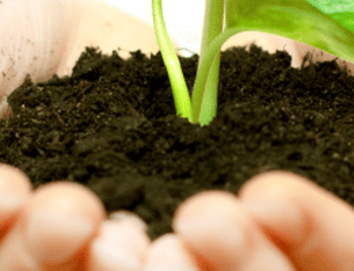 6 Magic Beans To Grow Your Community